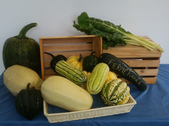organic-squash-courge-biologiques