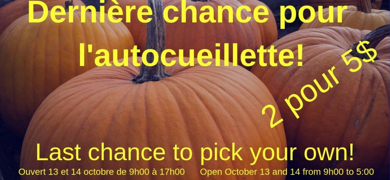 pumpkins_citrouilles_biologiques_organic_upick_autoceuilliette_2