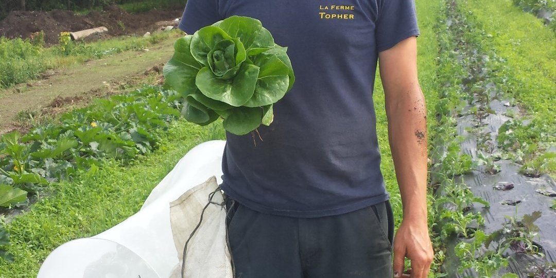 topher_lettuce_organic_vegetables_legumes_biologiques