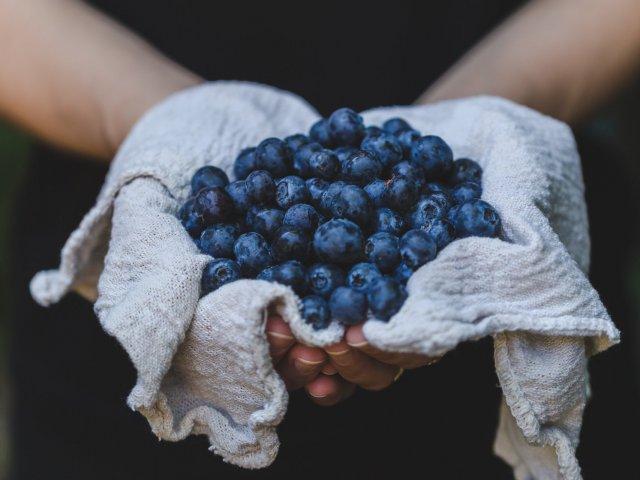 blueberries_organic_biologique_fruits